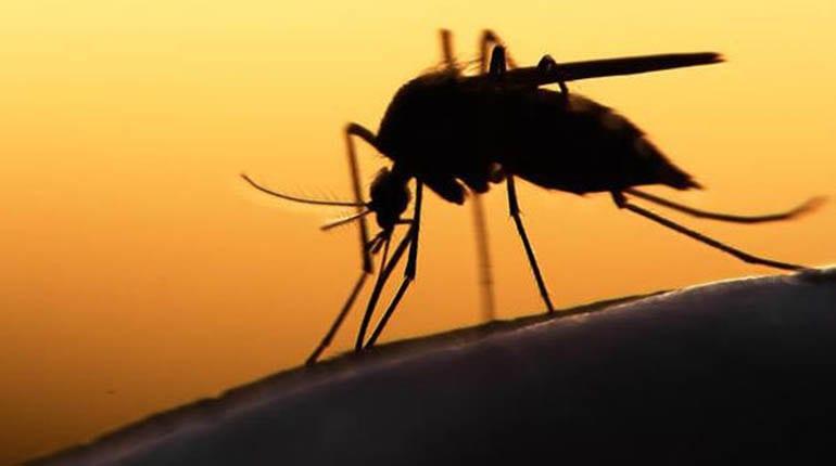 El Zika aprovecha las bajas defensas de las embarazadas para atacar al feto