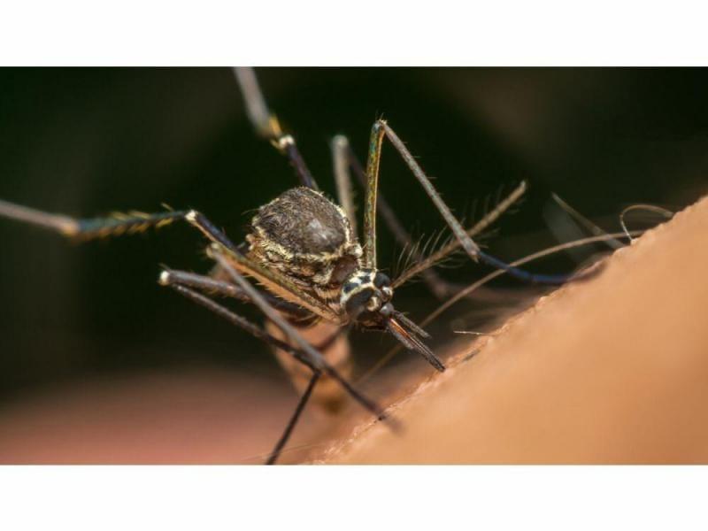 América Latina libre de malaria para 2020