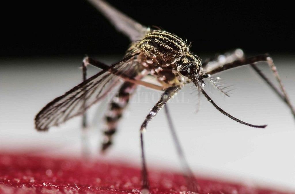 Alertan por el avance de 2 virus que transmiten los mosquitos : : El Litoral – Noticias – Santa Fe – Argentina
