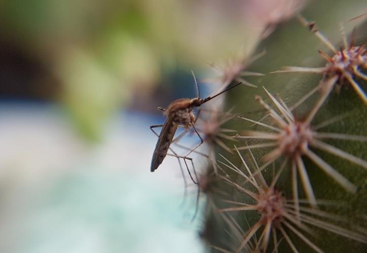 EEUU, en alerta por mosquito que transmite enfermedad mortal